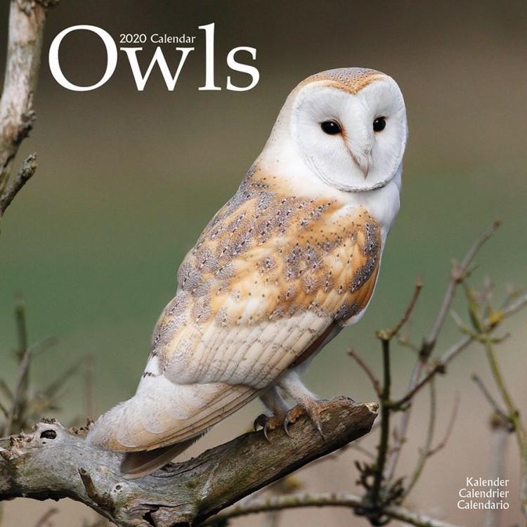 Owls Calendar 2021
