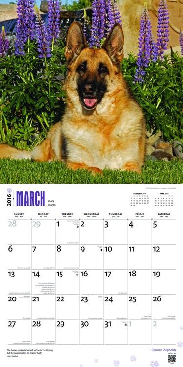 Calendario Pastore Tedesco 2020.Calendario 2020 Cane Da Pastore Tedesco