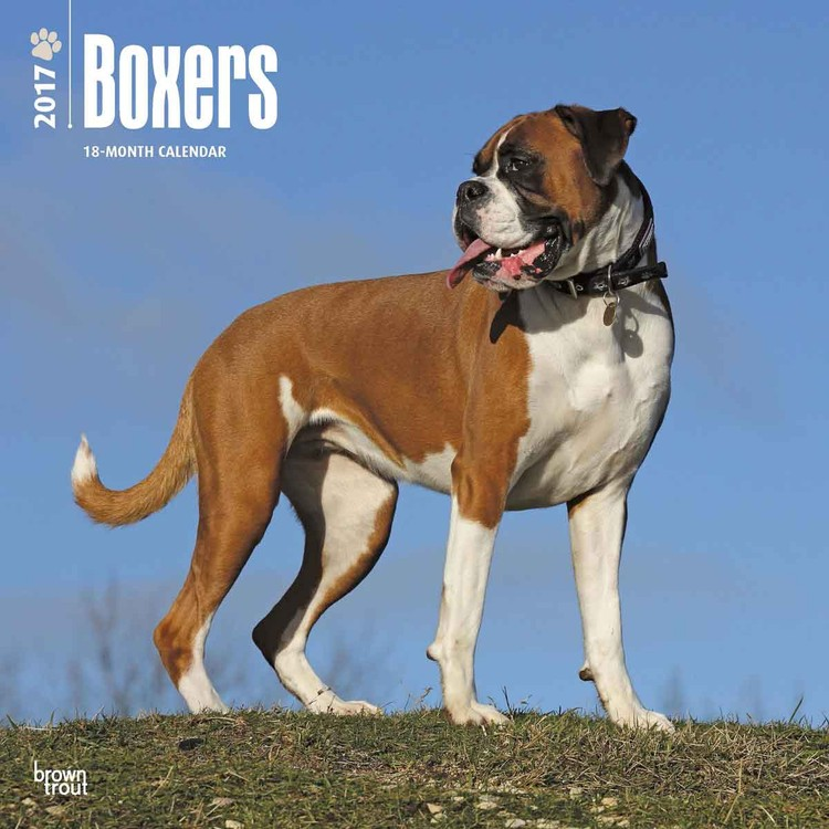 Calendario 2018 Deutscher boxer