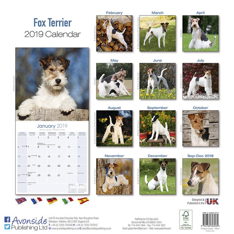 Calendario Fox.Calendario 2020 Fox Terrier