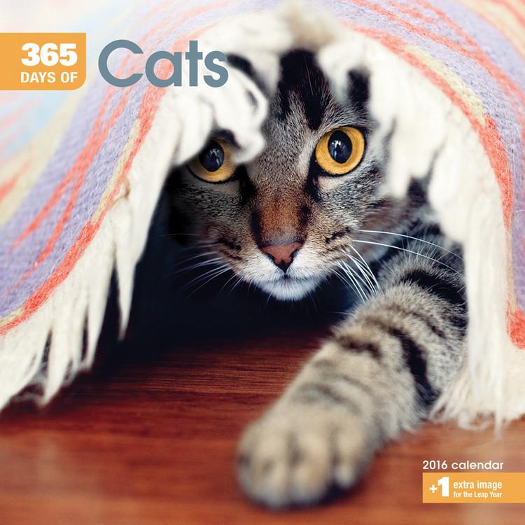 Calendario 2017 Gatti