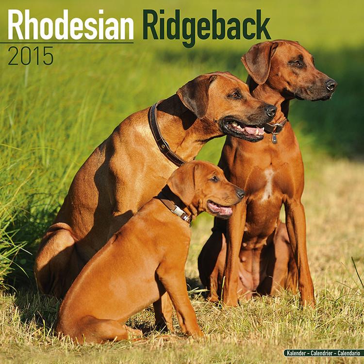 Calendario 2017 Rhodesian Ridgeback