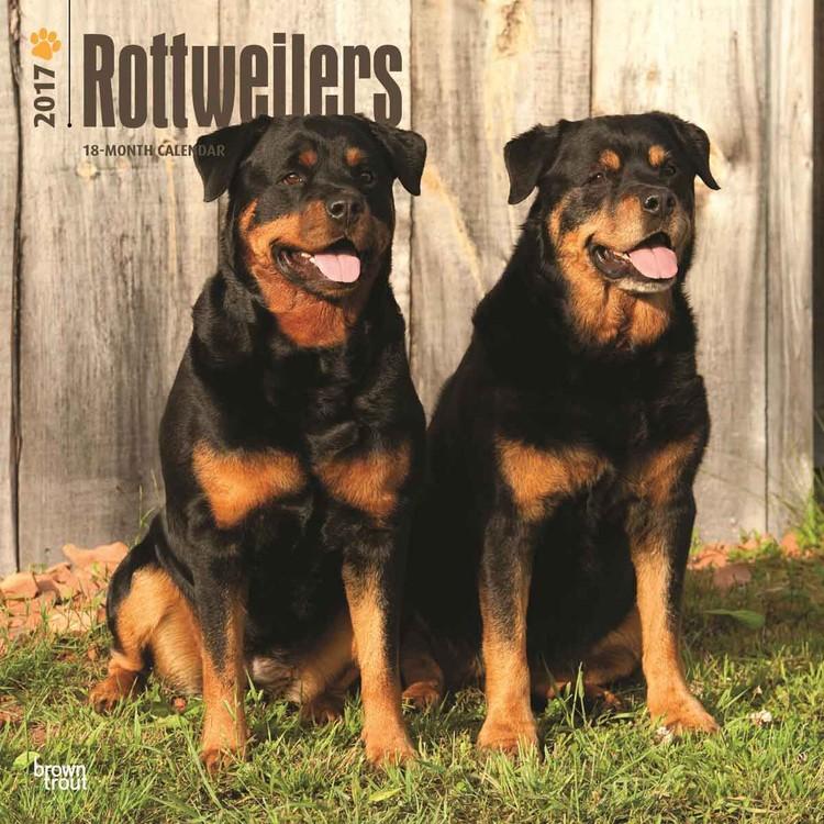 Calendario 2019  Rottweilers