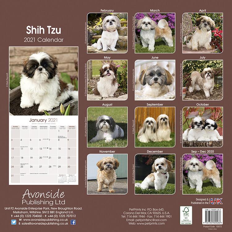 Shih Tzu 2021 Calendario moderno Calendari da muro Cancelleria e