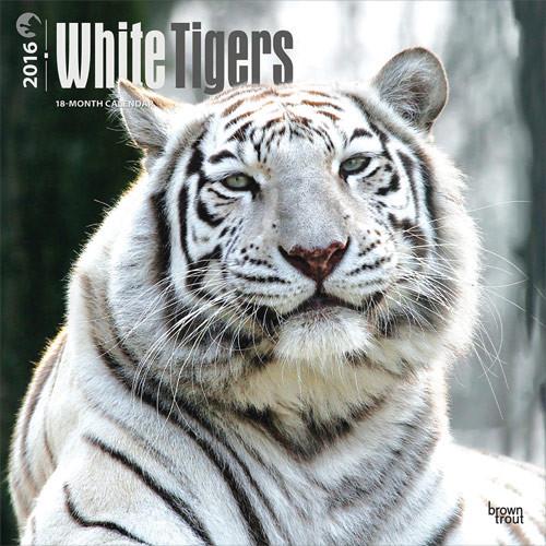 Calendario 2020 Tigri Bianche Europosters It