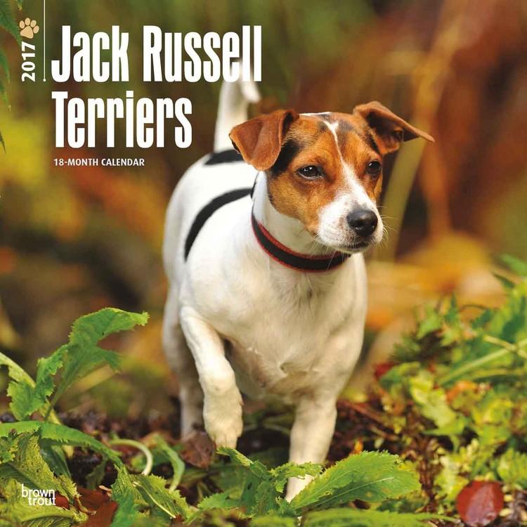 Calendar 2017 Jack Russell terrier