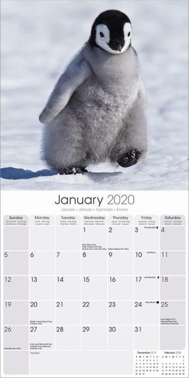 Calendar 2021 Penguins