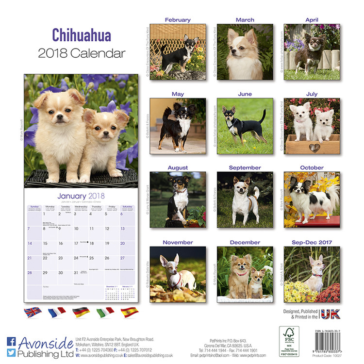 Calendrier 2020 Animaux.Chihuahua Calendrier 2020