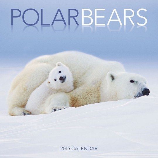 Ours blanc Calendrier 2018