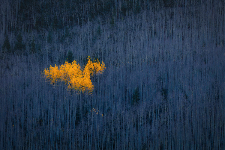 Heart of Aspens Canvas