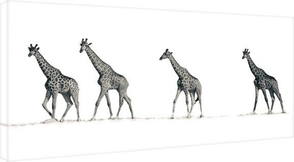 Canvas Mario Moreno - The Giraffes