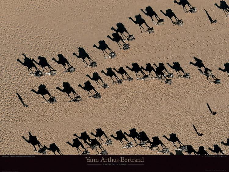 Caravanes de dromadaires - Niger Festmény reprodukció