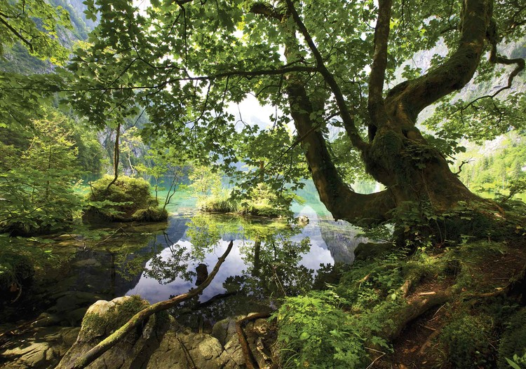 Carta da parati alberi lago natura for Carta da parati alberi stilizzati