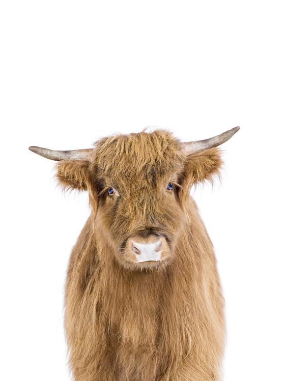 Carta da parati Baby Highland Cow