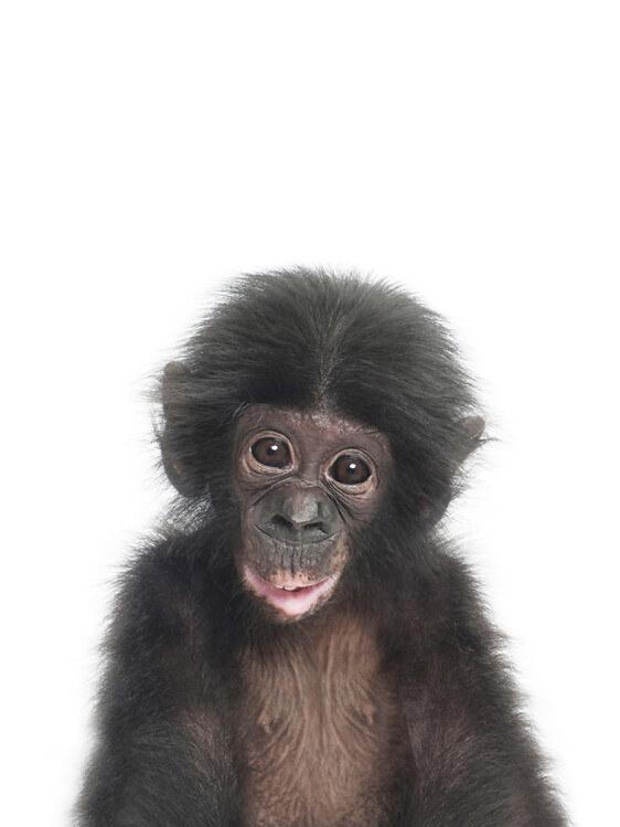 Carta da parati Baby Monkey