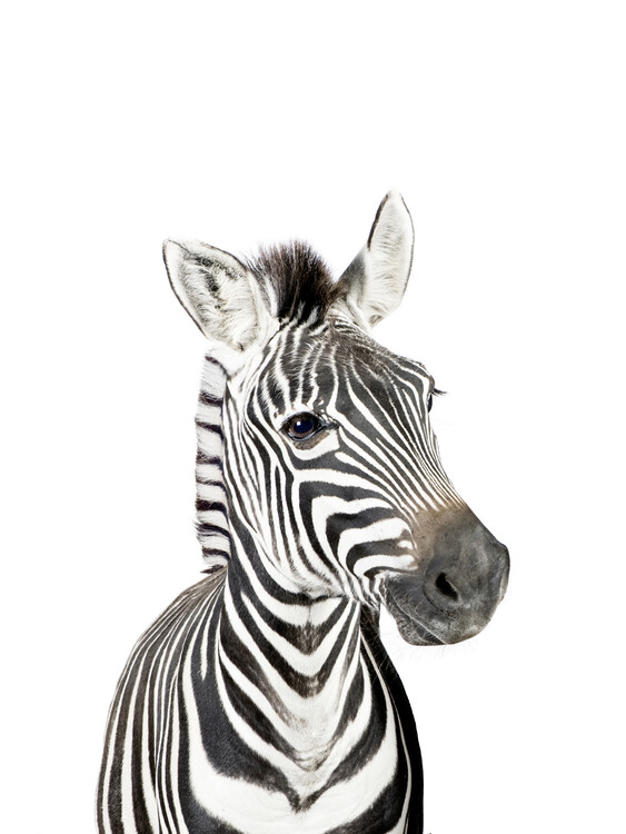 Carta da parati Baby Zebra