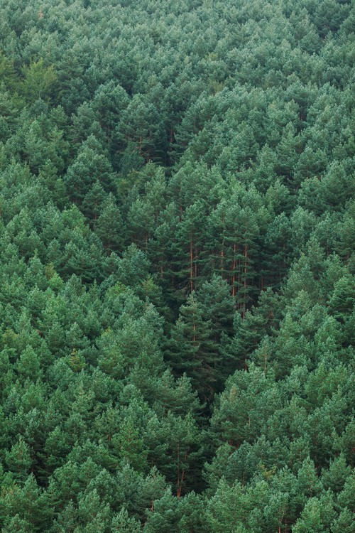 Carta da parati Fog over the forest