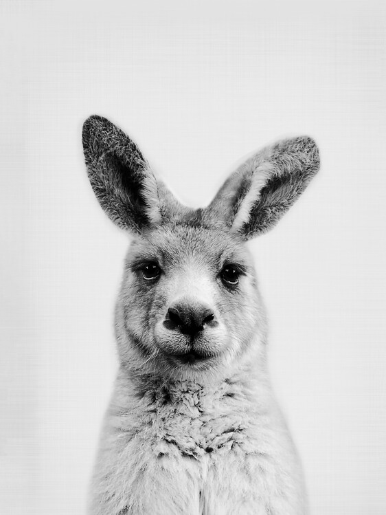 Carta da parati Kangaroo