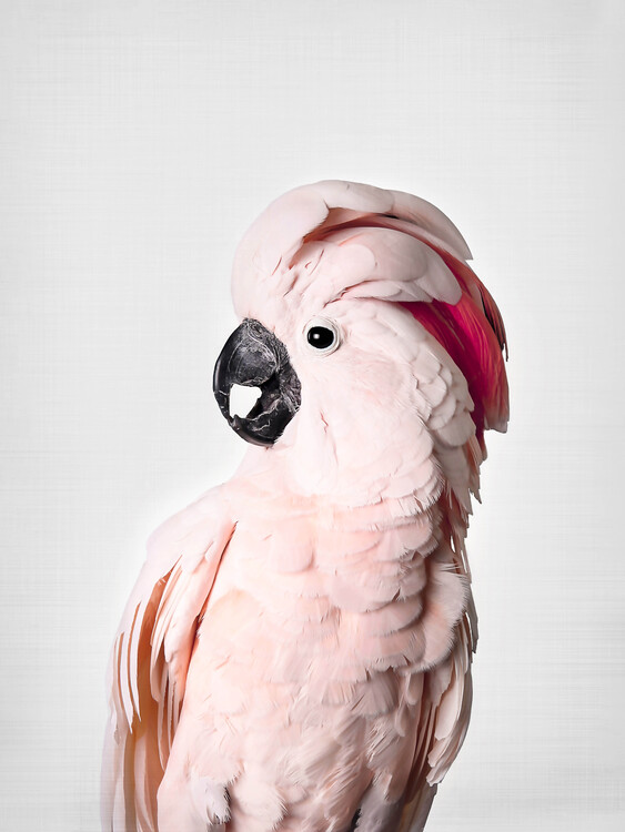 Carta da parati Pink Cockatoo