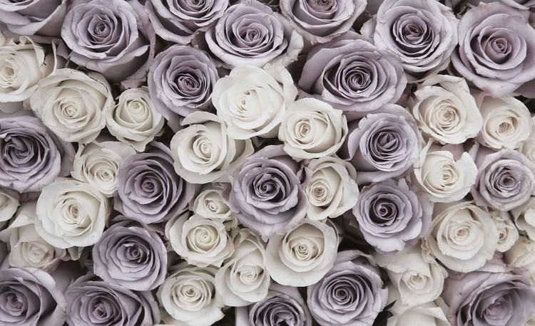 Carta Da Parati Rosa Bianca : Carta da parati rose fiori bianco viola europosters.it