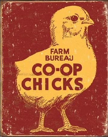 CO-OP CHICKS Carteles de chapa