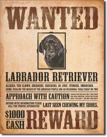 Cartelli Pubblicitari in Metallo BLACK LABRADOR - wanted