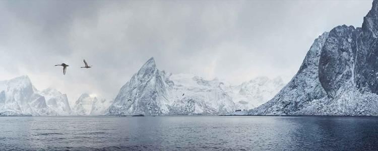 Cuadro en vidrio Arctic Flight