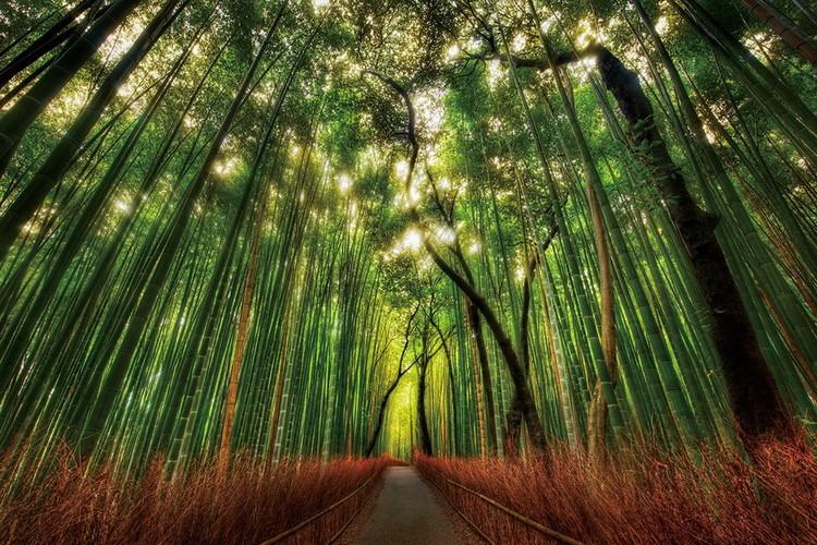 Cuadro en vidrio Bamboo Forest - Straight Path