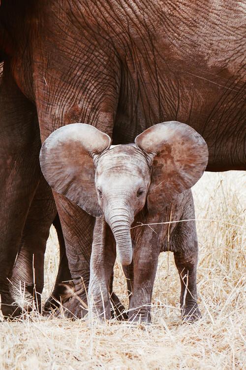 Exklusiva konstfoton Baby Elephant