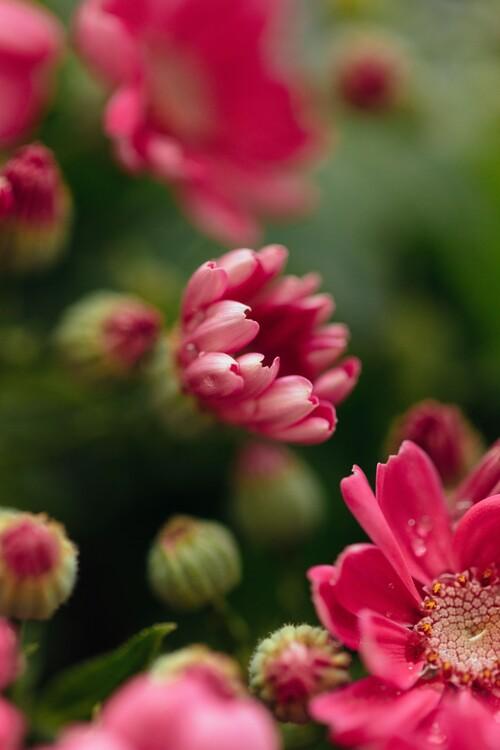 Exklusiva konstfoton Beauty or red flowers