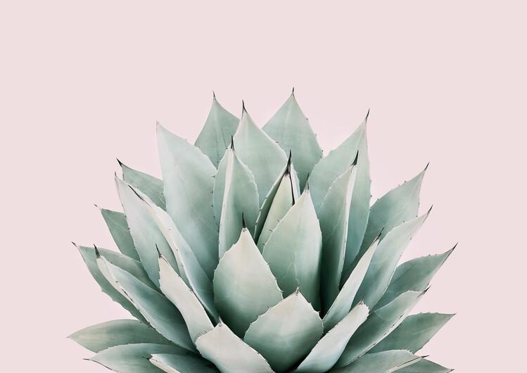 Exklusiva konstfoton Blushing succulent