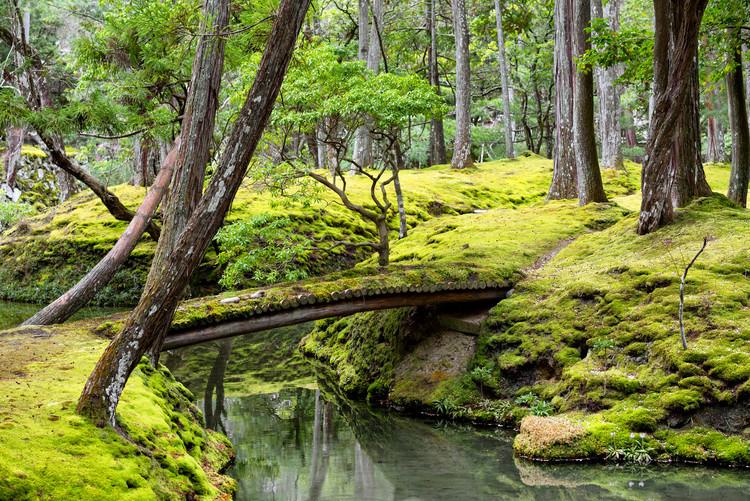 Exklusiva konstfoton Bridge in Moss Garden