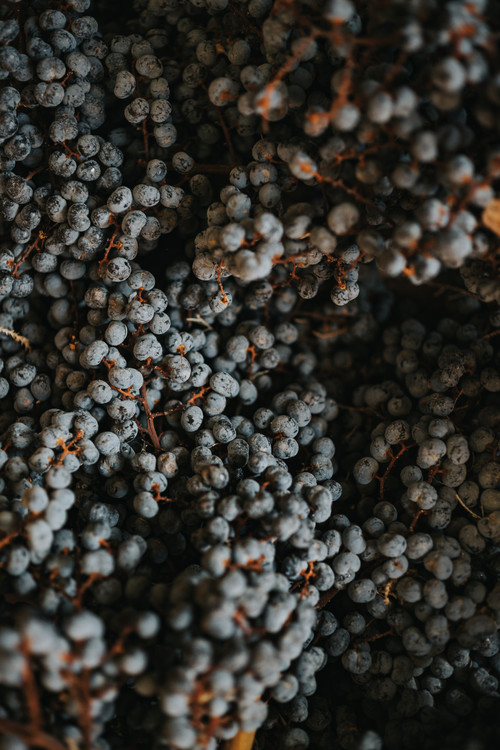 Exklusiva konstfoton Dry fruits from nature