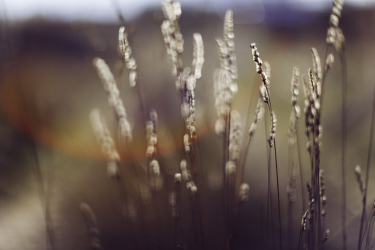 Exklusiva konstfoton Dry plants