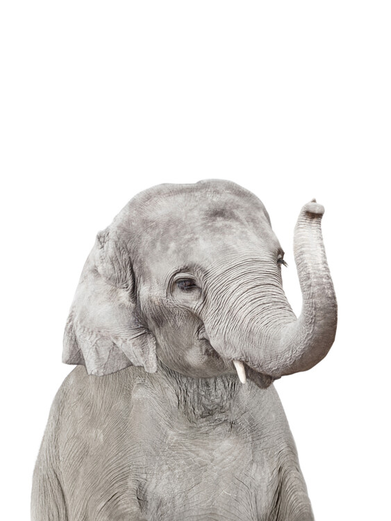 Exklusiva konstfoton Elephant 2