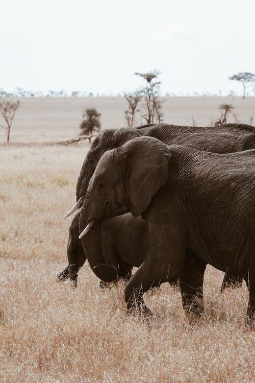 Exklusiva konstfoton Elephant Family
