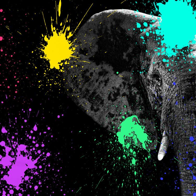 Exklusiva konstfoton Elephant Portrait