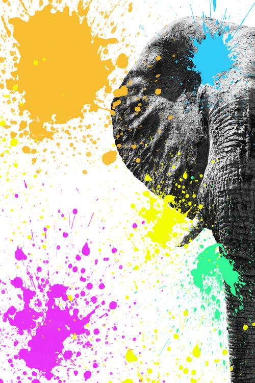 Exklusiva konstfoton Elephant Portrait II