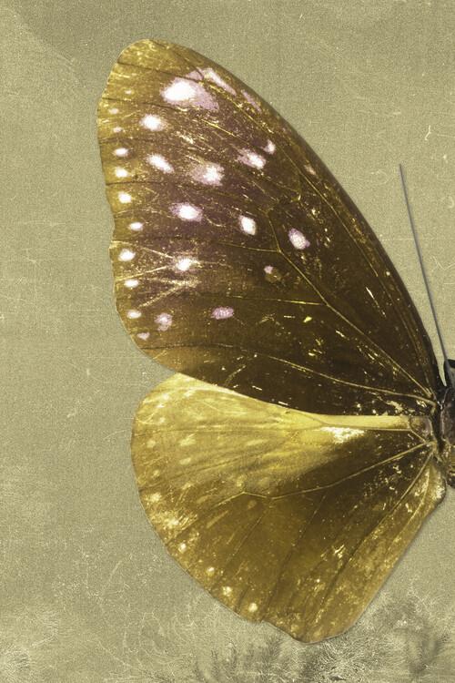 Exklusiva konstfoton EUPLOEA PROFIL - GOLD