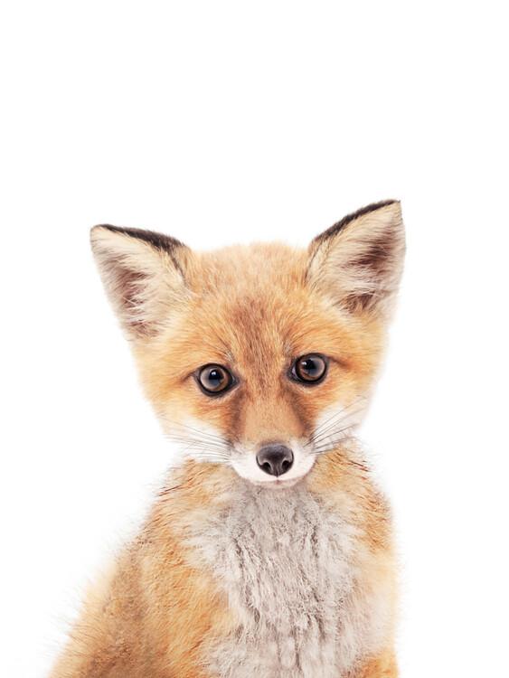 Exklusiva konstfoton Fox 1