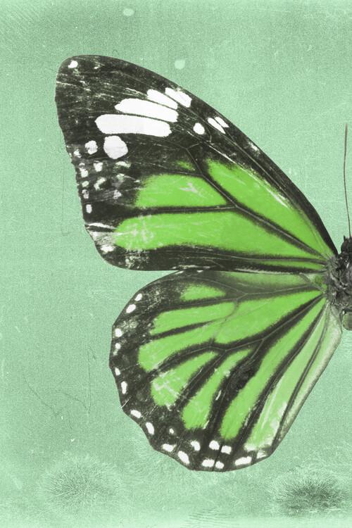 Exklusiva konstfoton GENUTIA PROFIL - GREEN