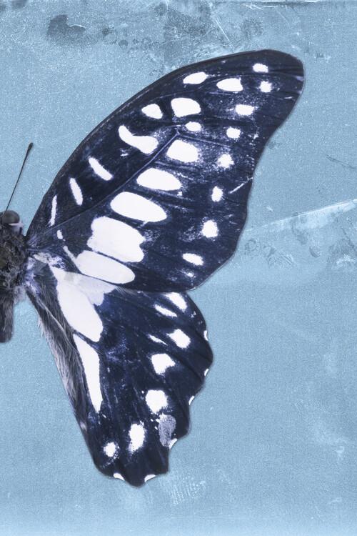 Exklusiva konstfoton GRAPHIUM PROFIL - BLUE