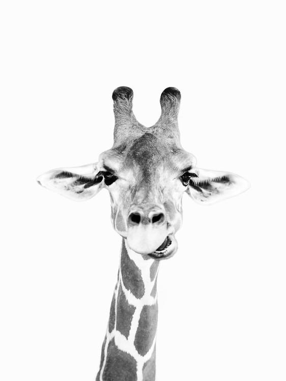 Exklusiva konstfoton Happy giraffe