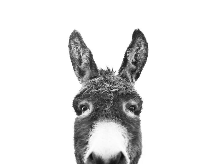 Exklusiva konstfoton Hello donkey