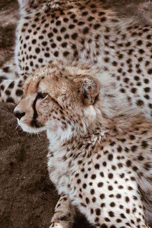Exklusiva konstfoton Leopard family
