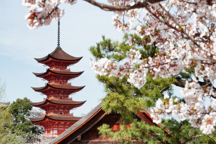 Exklusiva konstfoton Miyajima Pagoda with Sakura