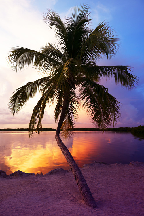 Exklusiva konstfoton Palm Tree at Sunset - Florida