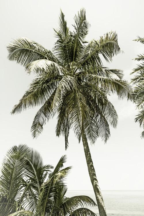 Exklusiva konstfoton Palm Trees at the beach | Vintage