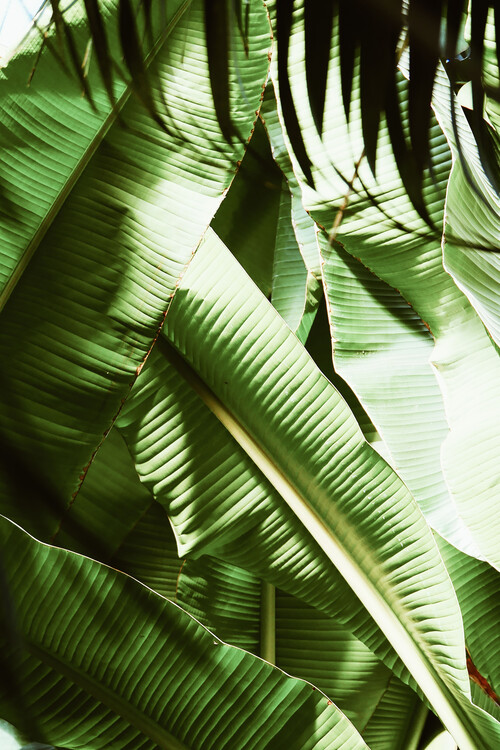 Exklusiva konstfoton Palm wonder