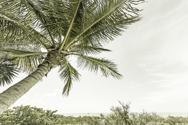 Exklusiva konstfoton Summertime in Florida | Vintage